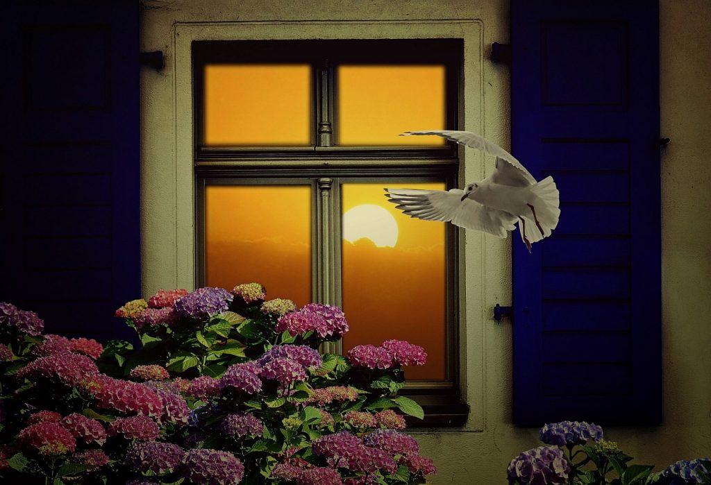 Sehnsucht nach zu Hause: Ein Fenster, vor dem ein blühender Hortensienstrauch steht, an dem eine Möwe vorbeifliegt - und hinter dem (im Innern des Hauses!) eine warm scheinende Sonne zu sehen ist