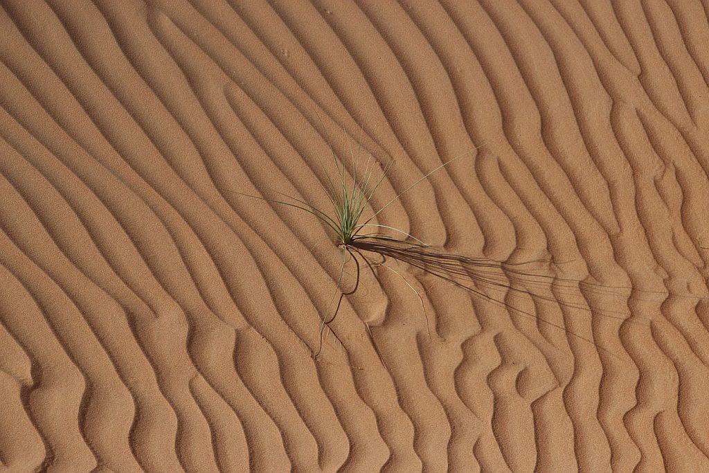 Ein Grasbüschel in der Wüste - zur Illustration der Hagar, die in der Wüste eine Ostererfahrung macht